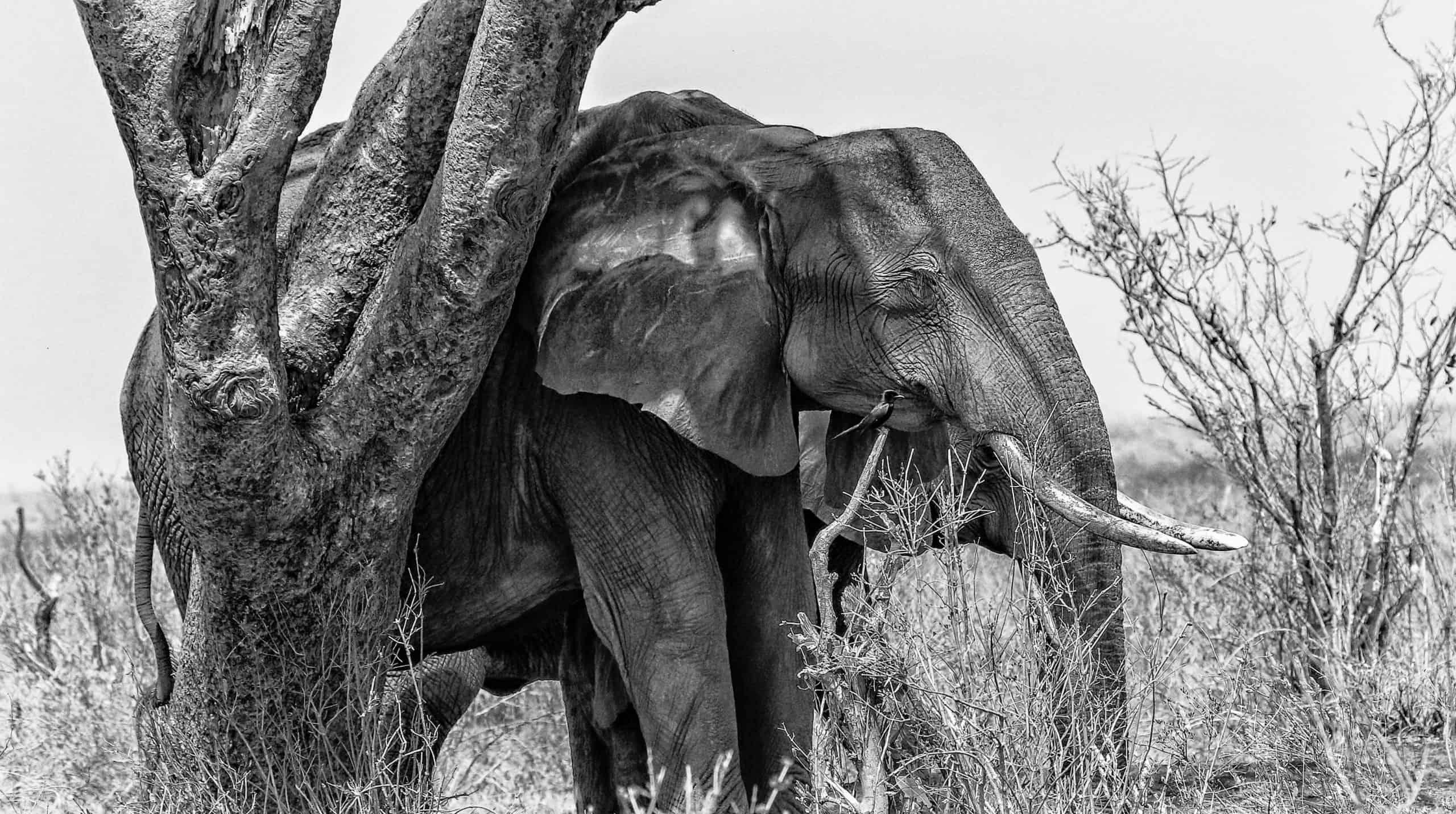5 Blinde und 1 Elefant